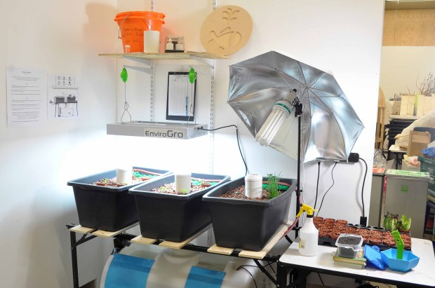 Triple grow bed aquaponics system, with pak choi, cabbage and lettuce seedlings, and 17 tilapia fish