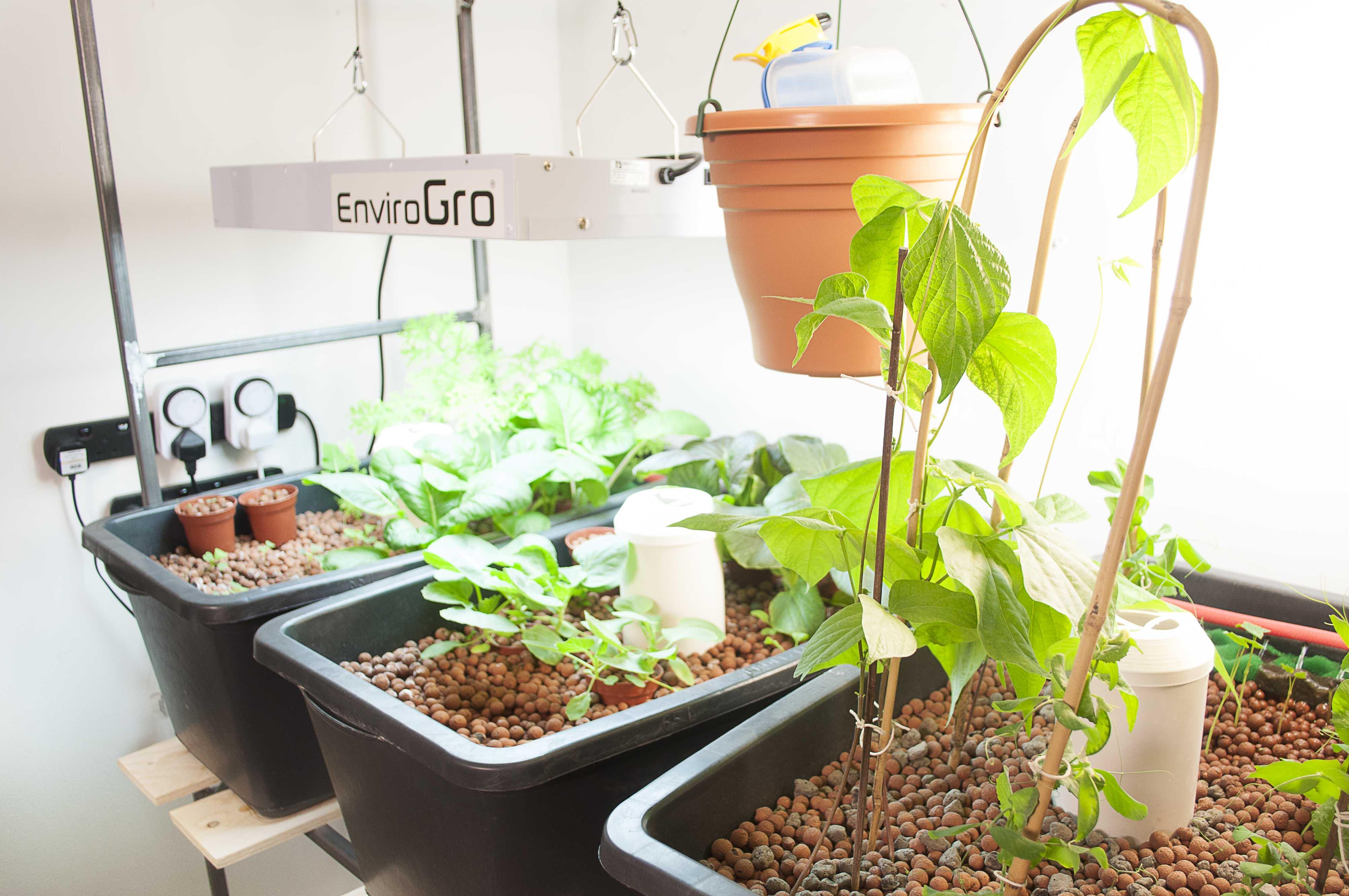 Aquaponics system experiments in aquaponics for Aquaponics grow bed